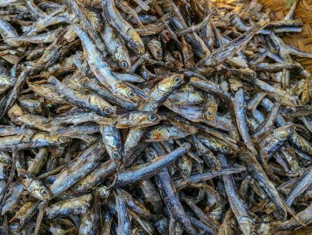 Dried anchovies/ sardines