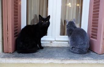 Stray cats, Nafplio
